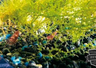 Artemia Aquarium